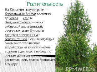На Кольском полуострове— бородавчатая берёза; восточнее до Урала— ел