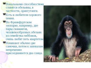 Вокальными способностями славятся обезьяны, в частности, орангутанги. Вокальными