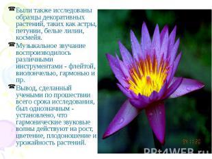 Были также исследованы образцы декоративных растений, таких как астры, петунии,