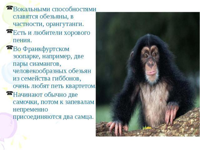 Вокальными способностями славятся обезьяны, в частности, орангутанги. Вокальными способностями славятся обезьяны, в частности, орангутанги. Есть и любители хорового пения. Во Франкфуртском зоопарке, например, две пары сиамангов, человекообразных обе…
