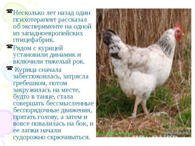 Несколько лет назад один психотерапевт рассказал об эксперименте на одной из западноевропейских птицефабрик. Несколько лет назад один психотерапевт рассказал об эксперименте на одной из западноевропейских птицефабрик. Рядом с курицей установили дина…
