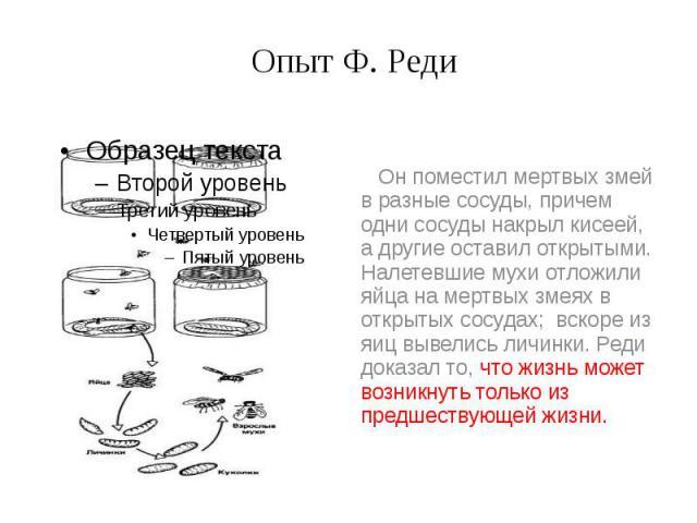 Опыт Ф. Реди Он поместил мертвых змей в разные сосуды, причем одни сосуды накрыл кисеей, а другие оставил открытыми. Налетевшие мухи отложили яйца на мертвых змеях в открытых сосудах; вскоре из яиц вывелись личинки. Реди доказал то, что жизнь может …