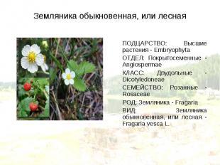ПОДЦАРСТВО: Высшие растения - Embryophyta ПОДЦАРСТВО: Высшие растения - Embryoph