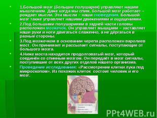 1.Большой мозг (большие полушария) управляют нашим мышлением. Даже когда мы спим