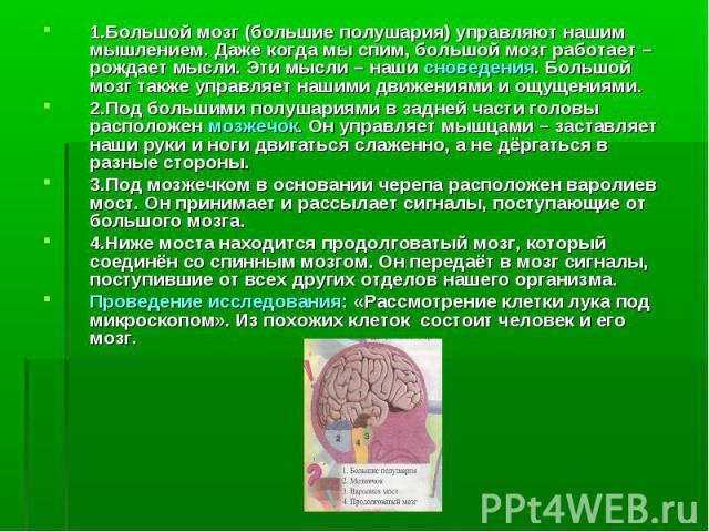 1.Большой мозг (большие полушария) управляют нашим мышлением. Даже когда мы спим, большой мозг работает – рождает мысли. Эти мысли – наши сноведения. Большой мозг также управляет нашими движениями и ощущениями. 1.Большой мозг (большие полушария) упр…
