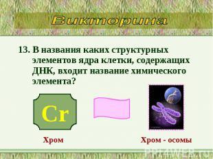 13. В названия каких структурных элементов ядра клетки, содержащих ДНК, входит н