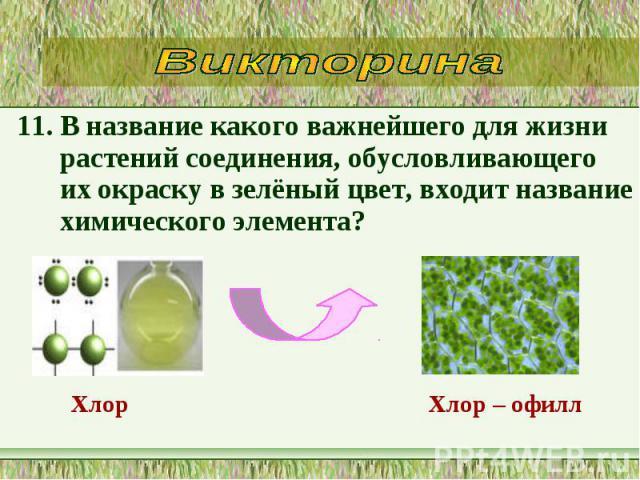 11. В название какого важнейшего для жизни растений соединения, обусловливающего их окраску в зелёный цвет, входит название химического элемента? 11. В название какого важнейшего для жизни растений соединения, обусловливающего их окраску в зелёный ц…