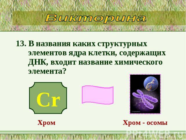 13. В названия каких структурных элементов ядра клетки, содержащих ДНК, входит название химического элемента? 13. В названия каких структурных элементов ядра клетки, содержащих ДНК, входит название химического элемента?