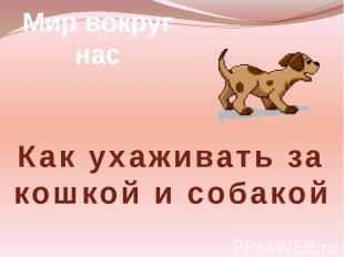 Мир вокруг нас Как ухаживать за кошкой и собакой