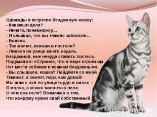 Однажды я встретил бездомную кошку: - Как ваши дела? - Ничего, понемножку… - Я с