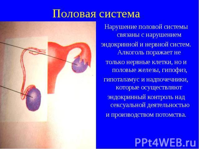 Нарушение половой системы связаны с нарушением Нарушение половой системы связаны с нарушением эндокринной и нервной систем. Алкоголь поражает не только нервные клетки, но и половые железы, гипофиз, гипоталамус и надпочечники, которые осуществляют эн…