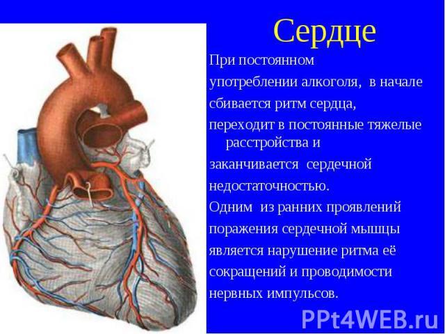 При постоянном При постоянном употреблении алкоголя, в начале сбивается ритм сердца, переходит в постоянные тяжелые расстройства и заканчивается сердечной недостаточностью. Одним из ранних проявлений поражения сердечной мышцы является нарушение ритм…