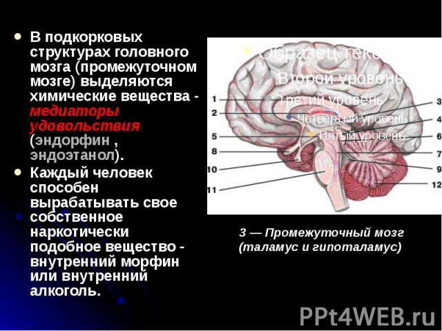 В подкорковых структурах головного мозга (промежуточном мозге) выделяются химические вещества - медиаторы удовольствия (эндорфин , эндоэтанол). В подкорковых структурах головного мозга (промежуточном мозге) выделяются химические вещества - медиаторы…