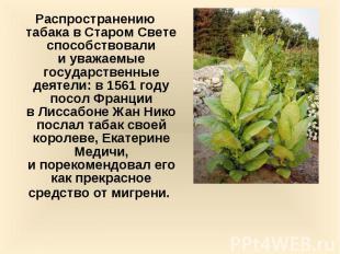 Распространению табака вСтаром Свете способствовали иуважаемые госуд
