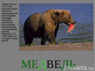 Удивительно, что столь могучий зверь питается преимущественно ягодами, плодами,