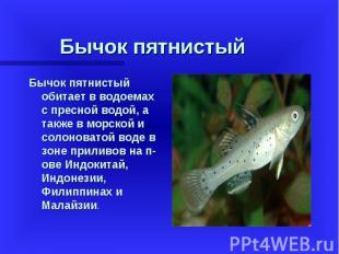 Бычок пятнистый обитает в водоемах с пресной водой, а также в морской и солонова