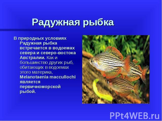 В природных условиях Радужная рыбка встречается в водоемах севера и северо-востока Австралии. Как и большинство других рыб, обитающих в водоемах этого материка, Melanotaenia maccullochi является первичноморской рыбой. В природных условиях Радужная р…