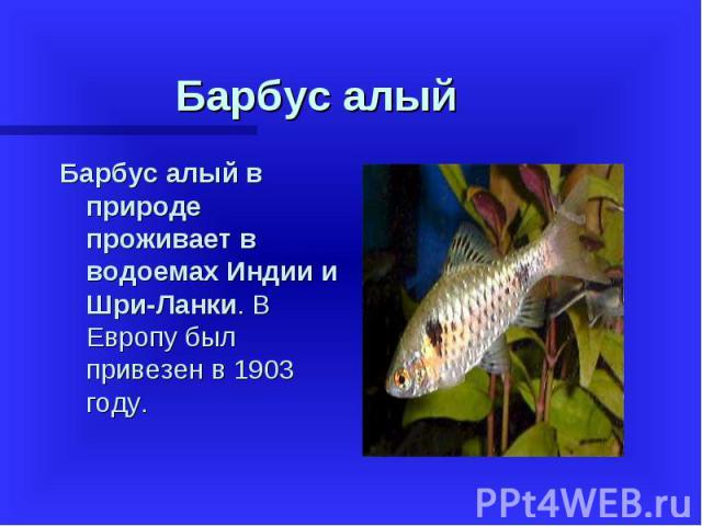 Барбус алый в природе проживает в водоемах Индии и Шри-Ланки. В Европу был привезен в 1903 году. Барбус алый в природе проживает в водоемах Индии и Шри-Ланки. В Европу был привезен в 1903 году.