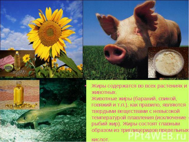 Жиры содержатся во всех растениях и животных. Животные жиры (бараний, свиной, говяжий и т.п.), как правило, являются твердыми веществами с невысокой температурой плавления (исключение - рыбий жир). Жиры состоят главным образом из триглицеридов преде…