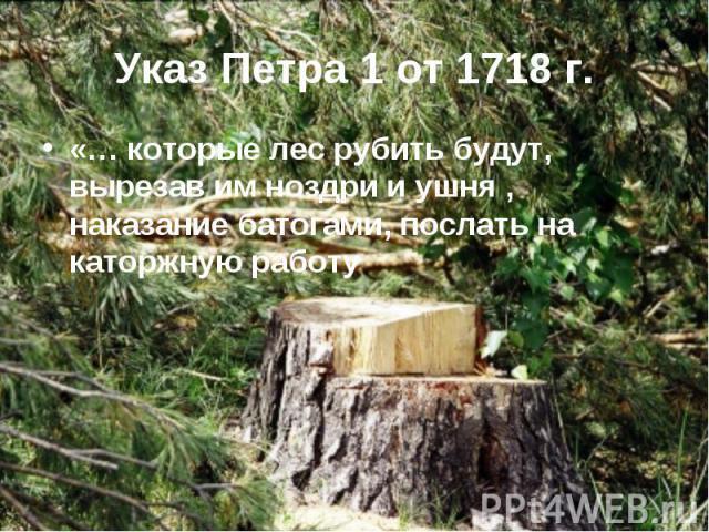 «… которые лес рубить будут, вырезав им ноздри и ушня , наказание батогами, послать на каторжную работу «… которые лес рубить будут, вырезав им ноздри и ушня , наказание батогами, послать на каторжную работу