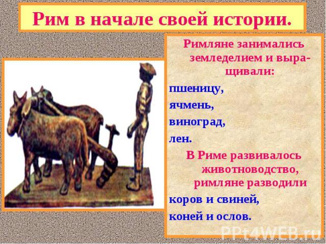Римляне занимались земледелием и выра-щивали: Римляне занимались земледелием и выра-щивали: пшеницу, ячмень, виноград, лен. В Риме развивалось животноводство, римляне разводили коров и свиней, коней и ослов.