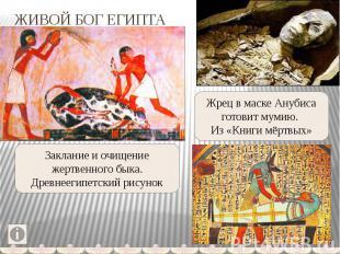ЖИВОЙ БОГ ЕГИПТА