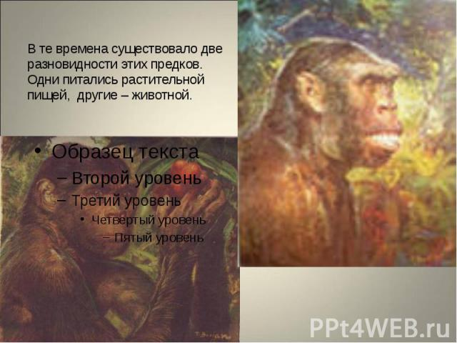 В те времена существовало две разновидности этих предков. Одни питались растительной пищей, другие – животной.