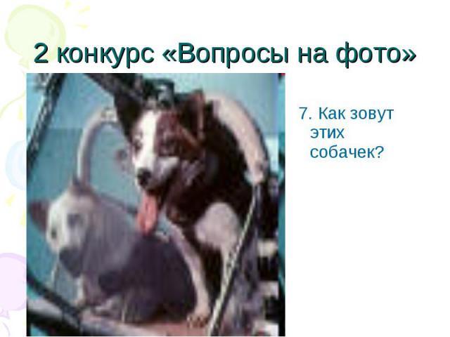 7. Как зовут этих собачек? 7. Как зовут этих собачек?