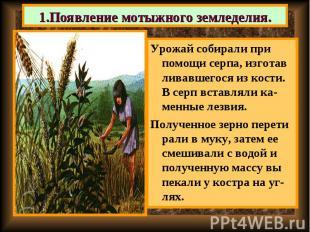 Урожай собирали при помощи серпа, изготав ливавшегося из кости. В серп вставляли