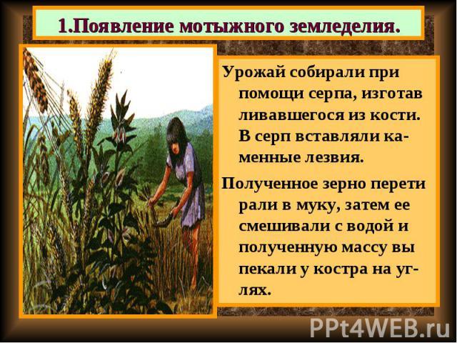 Урожай собирали при помощи серпа, изготав ливавшегося из кости. В серп вставляли ка-менные лезвия. Урожай собирали при помощи серпа, изготав ливавшегося из кости. В серп вставляли ка-менные лезвия. Полученное зерно перети рали в муку, затем ее смеши…