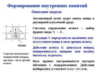 Формирование внутренних понятий Описание модели