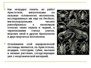 Как нетрудно понять из работ Аристотеля, мягкотелыми он называл головоногих молл