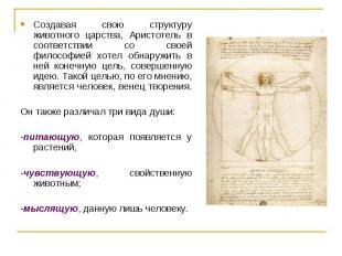 Создавая свою структуру животного царства, Аристотель в соответствии со своей фи