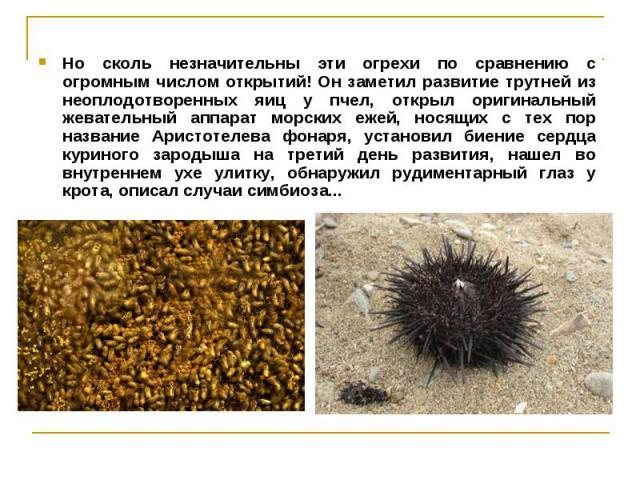 Но сколь незначительны эти огрехи по сравнению с огромным числом открытий! Он заметил развитие трутней из неоплодотворенных яиц у пчел, открыл оригинальный жевательный аппарат морских ежей, носящих с тех пор название Аристотелева фонаря, установил б…