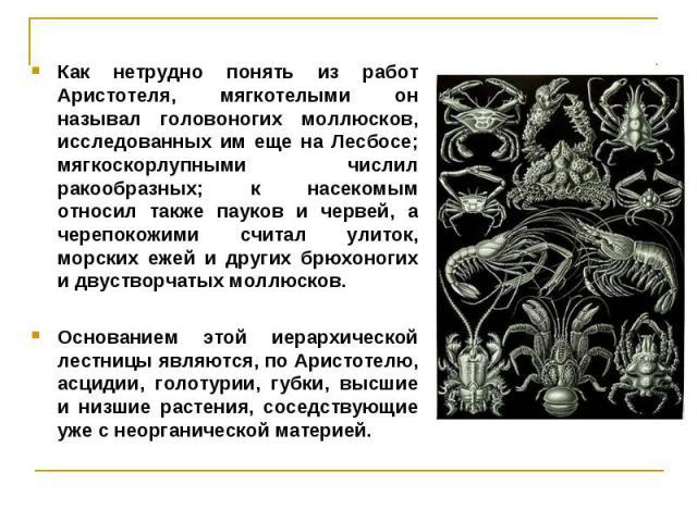 Как нетрудно понять из работ Аристотеля, мягкотелыми он называл головоногих моллюсков, исследованных им еще на Лесбосе; мягкоскорлупными числил ракообразных; к насекомым относил также пауков и червей, а черепокожими считал улиток, морских ежей и дру…
