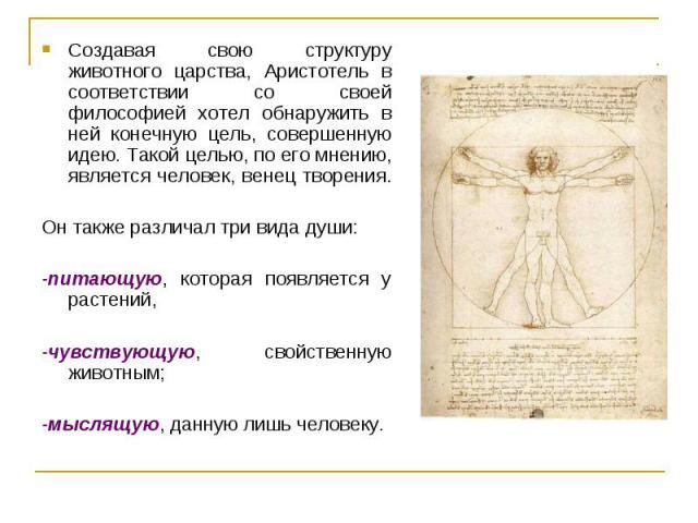 Создавая свою структуру животного царства, Аристотель в соответствии со своей философией хотел обнаружить в ней конечную цель, совершенную идею. Такой целью, по его мнению, является человек, венец творения. Создавая свою структуру животного царства,…