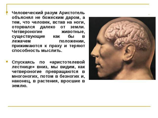 Человеческий разум Аристотель объяснял не божеским даром, а тем, что человек, встав на ноги, оторвался далеко от земли. Четвероногие животные, существующие как бы в лежачем положении, прижимаются к праху и теряют способность мыслить. Человеческий ра…