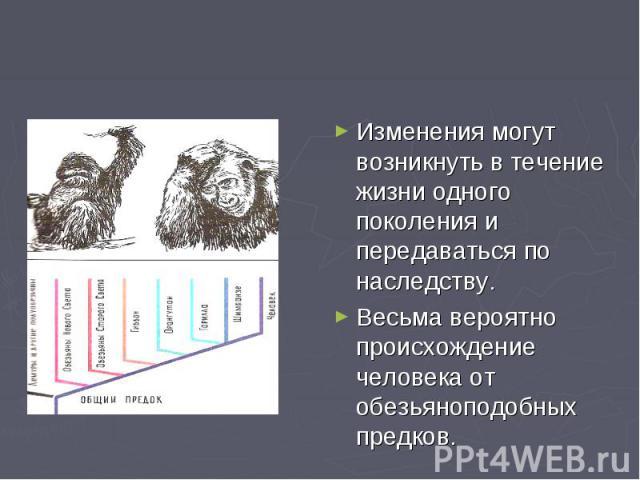 Изменения могут возникнуть в течение жизни одного поколения и передаваться по наследству. Весьма вероятно происхождение человека от обезьяноподобных предков.
