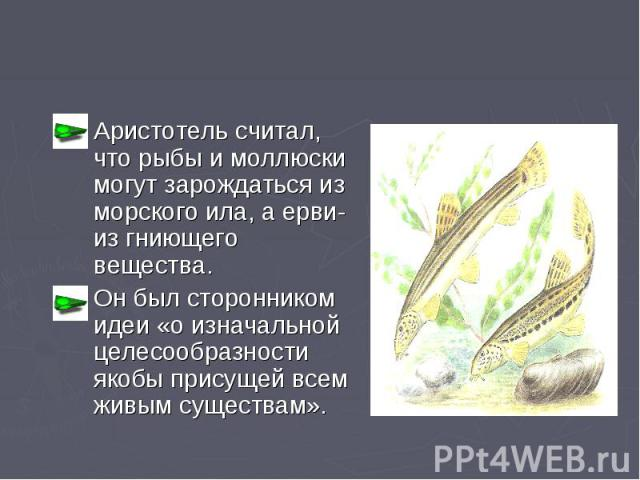 Аристотель считал, что рыбы и моллюски могут зарождаться из морского ила, а ерви- из гниющего вещества. Он был сторонником идеи «о изначальной целесообразности якобы присущей всем живым существам».