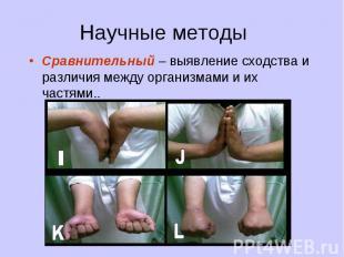 Сравнительный – выявление сходства и различия между организмами и их частями.. С