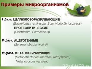I фаза. ЦЕЛЛЮЛОЗОРАЗРУШАЮЩИЕ I фаза. ЦЕЛЛЮЛОЗОРАЗРУШАЮЩИЕ (Bacterioides ruminico