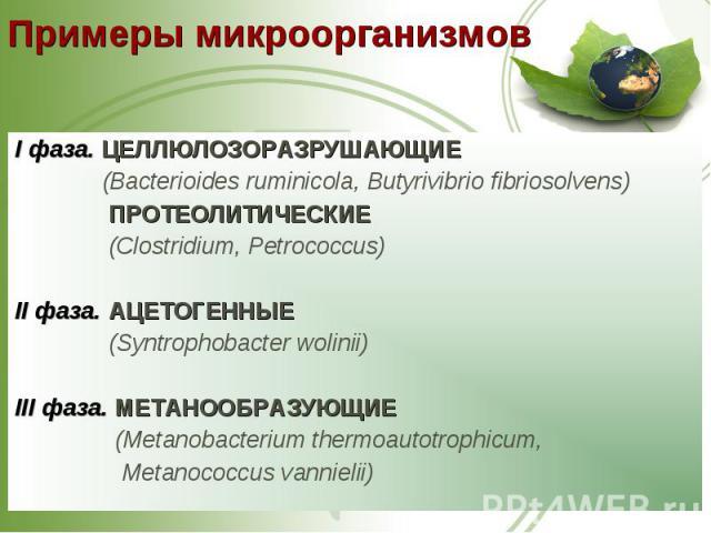 I фаза. ЦЕЛЛЮЛОЗОРАЗРУШАЮЩИЕ I фаза. ЦЕЛЛЮЛОЗОРАЗРУШАЮЩИЕ (Bacterioides ruminicola, Butyrivibrio fibriosolvens) ПРОТЕОЛИТИЧЕСКИЕ (Clostridium, Petrococcus) II фаза. АЦЕТОГЕННЫЕ (Syntrophobacter wolinii) III фаза. МЕТАНООБРАЗУЮЩИЕ (Metanobacterium th…