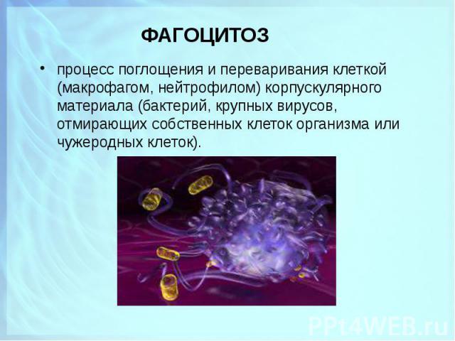 процесс поглощения и переваривания клеткой (макрофагом, нейтрофилом) корпускулярного материала (бактерий, крупных вирусов, отмирающих собственных клеток организма или чужеродных клеток). процесс поглощения и переваривания клеткой (макрофагом, нейтро…