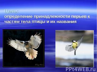Цель: определение принадлежности перьев к частям тела птицы и их названия