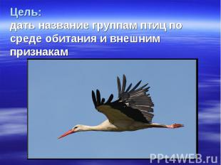 Цель: дать название группам птиц по среде обитания и внешним признакам
