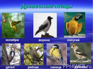 Древесные птицы