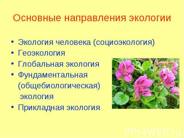 Экология человека (социоэкология) Экология человека (социоэкология) Геоэкология Глобальная экология Фундаментальная (общебиологическая) экология Прикладная экология