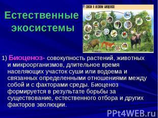 Естественные экосистемы 1) Биоценоз- совокупность растений, животных и микроорга