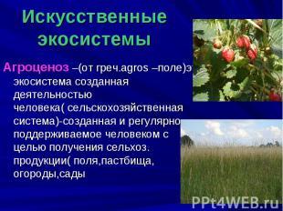 Искусственные экосистемы Агроценоз –(от греч.agros –поле)это экосистема созданна