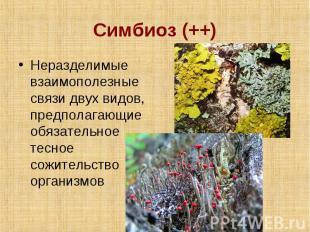 Симбиоз (++) Неразделимые взаимополезные связи двух видов, предполагающие обязат